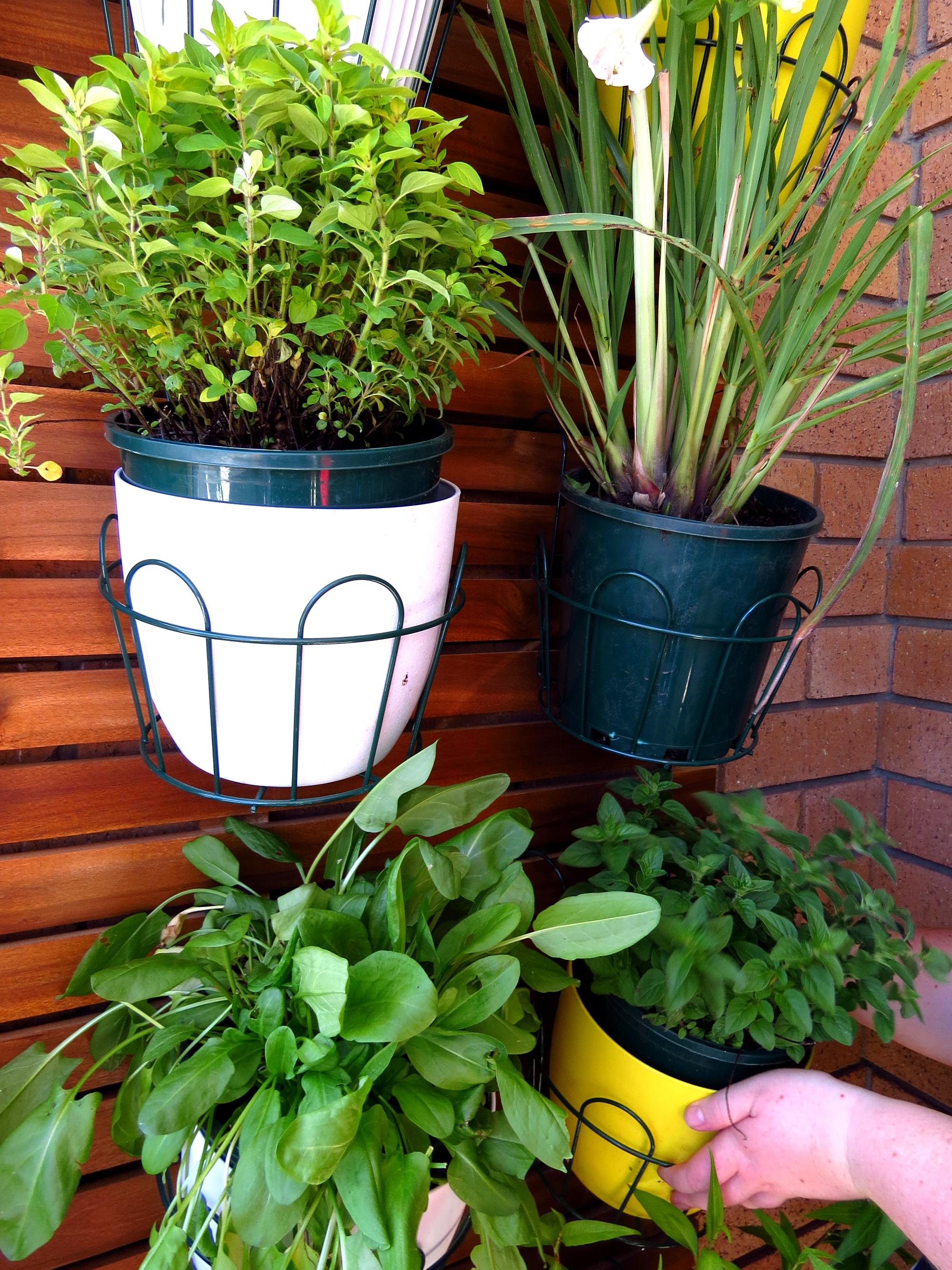 What plants grow best on a balcony garden - Decoracion con macetas ...