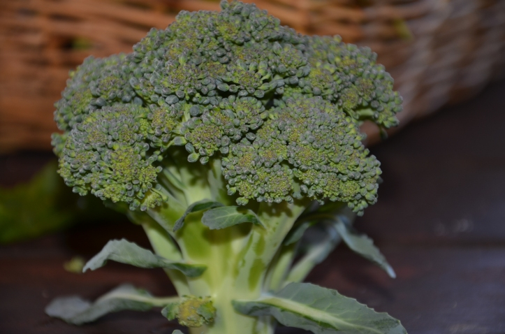 broccoli plant growing broccoli in autumn gardening australia organic vegetables
