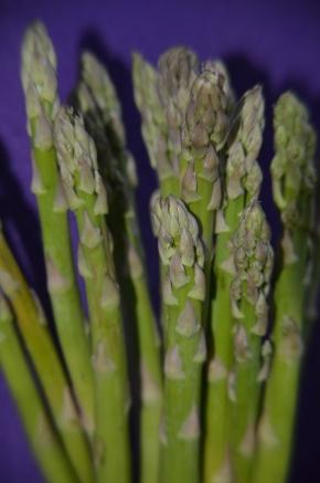 How to grow organic asparagus asparagus spears asparagus close up