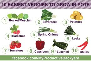 10 easiest veggies to grow in pots infographic radishes silverbeet rocket capsicum container gardening veggies in pots