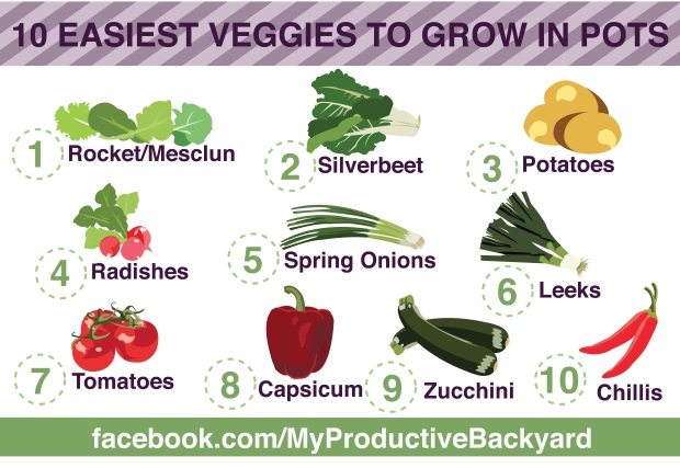 10 easiest veggies to grow in pots