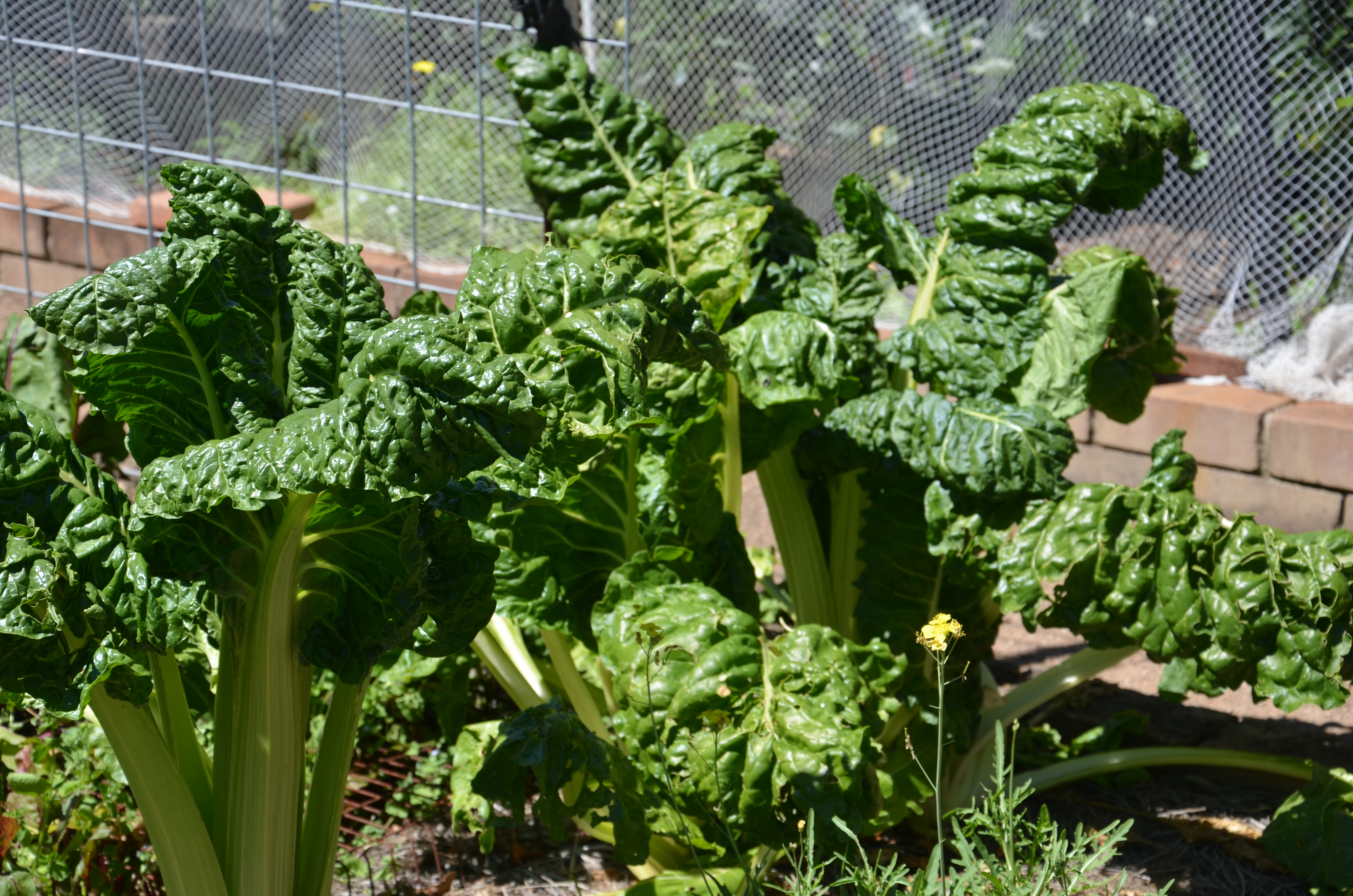 Preparing your spring and summer vegetable garden for Summer vegetable garden