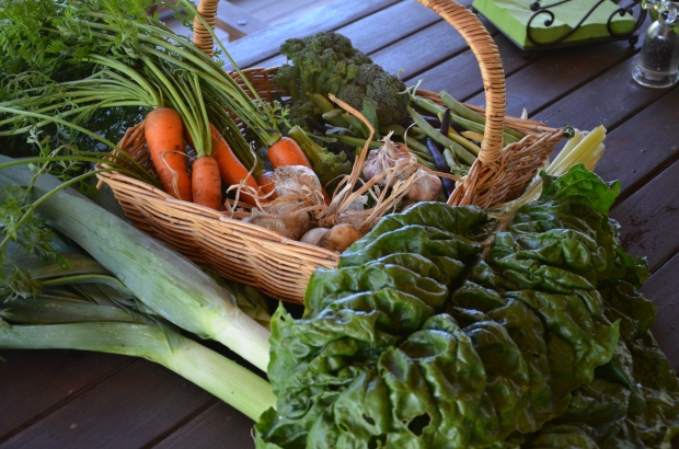 summer vegetable crop leeks broccoli veggie patch garlic spinach carrots harvesting homesteading