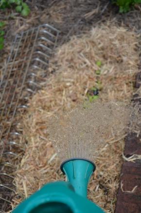 applying wetting agents to soil protecting your garden in summer summer gardening summer garden care seasol mpby myproductivebackyard my productive backyard kathy finigan nsw southern highlands australia