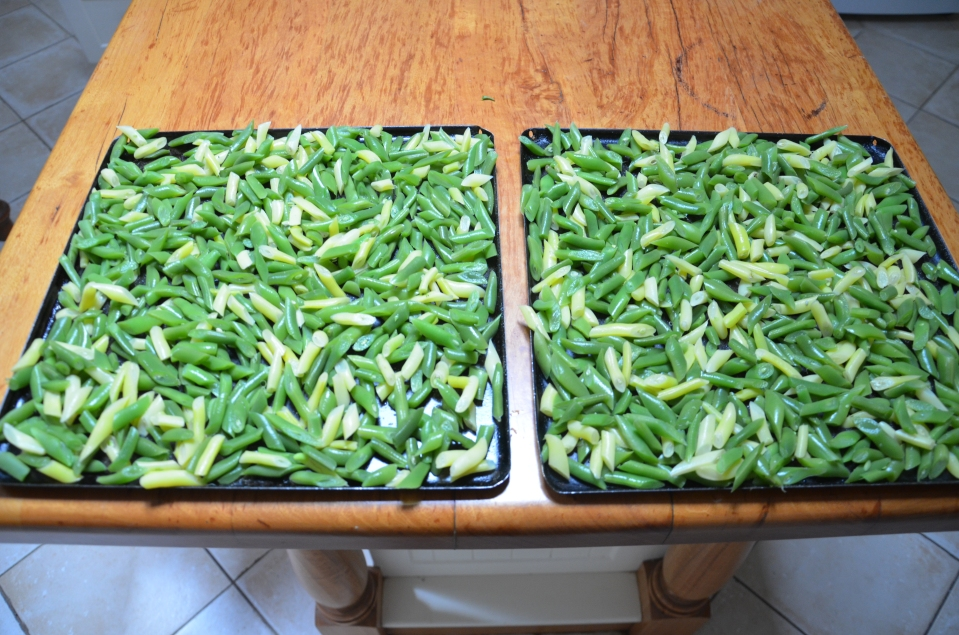 Place beans on trays in a single layer, cover and place into a freezer overnight