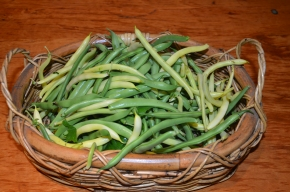 how to store beans how to freeze beans how to preserve beans preserving beans mpby myproductivebackyard my productive backyard kathy finigan broad beans butter beans too many beans nsw southern highlands summer vegetables