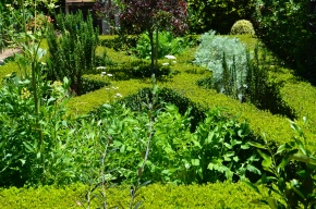grow your own herb garden from seeds and seedlings maintaining your herb garden garden maintenance