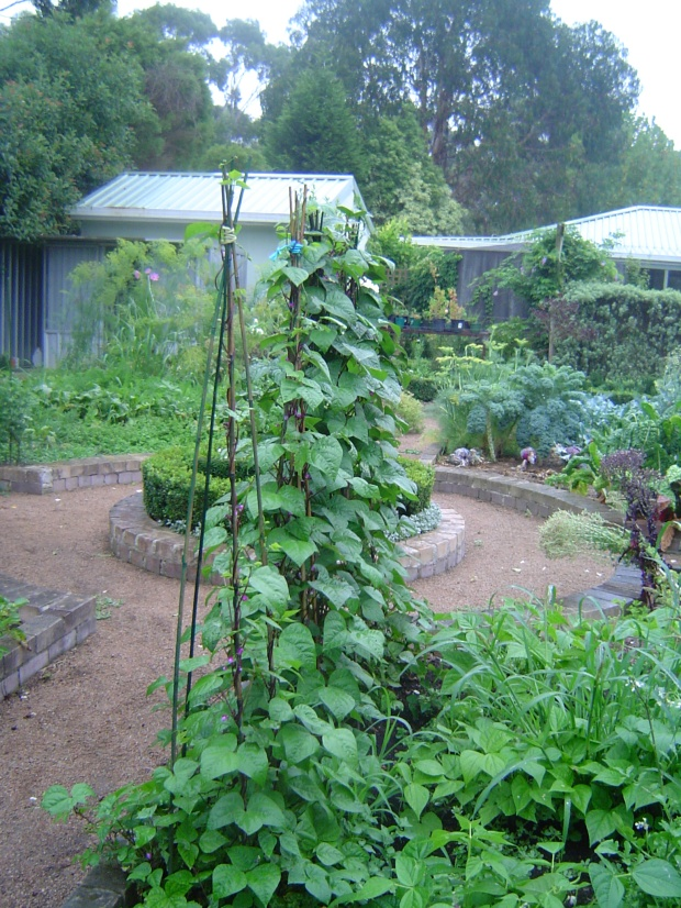 A thriving summer vegetable garden