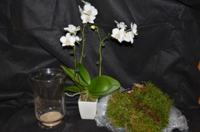 display orchid orchid in a pot growing orchids beautiful orchids white orchids how to grow orchids