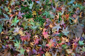 mulching autumn leaves garden make your own mulch autumn leaves falling leaves garden gardening
